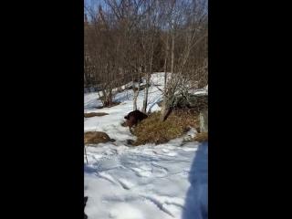 последний снежок или собачья радость(Кристи развлекается