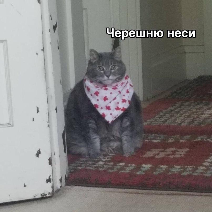 Евгений Авсиевич | Санкт-Петербург