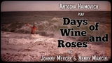 Antosha Haimovich - Days of Wine and Roses (Johnny Mercer, Henry Mancini)