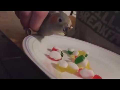 How to use birb as a fork