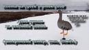 охота на гусей и уток 2018 штормовой ветер, снег, дождь NORTH WAY SOFTPLAST 3D