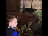 Темочка в зоопарке