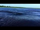 Hippos are so fast