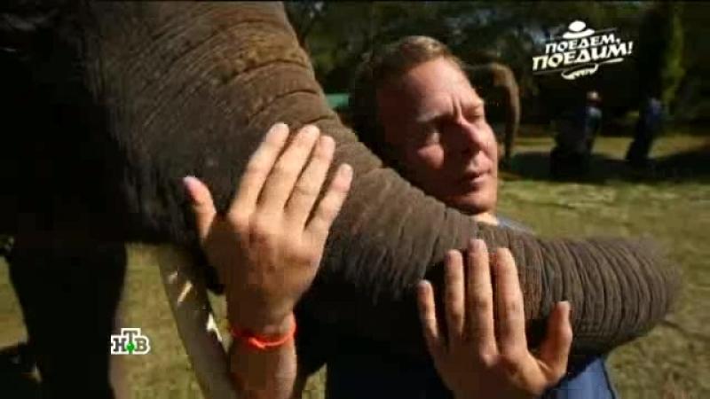 слоники - это не только ценный мех!