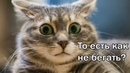 Смеялся пол часа! Кот и еще котее ! Смешные коты подборка 9!