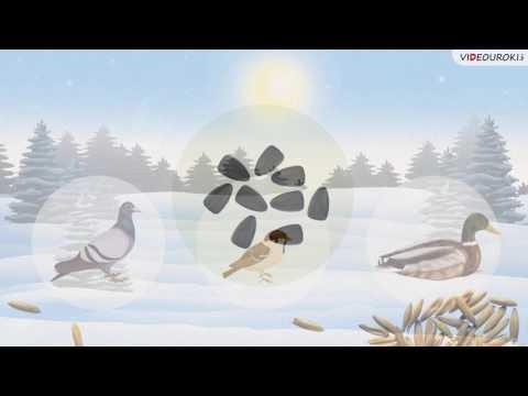Видеоурок по биологии Как правильно подкармливать птиц