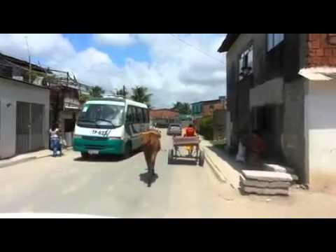 Cavalo machucado, carroceiro é obrigado e levar carroça no braço