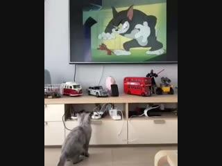 Котик смотрит мультики