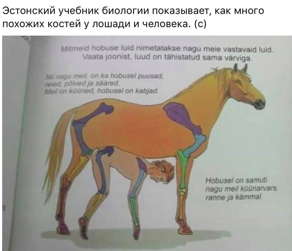https://pp.userapi.com/c845017/v845017043/116cb2/v8t7VrALzxk.jpg