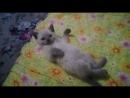 Отдам котёнка в хорошие руки сын кота Владика, Ачинск, смешные котята