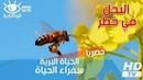 الحياة البرية سفراء الحياة ـ النحل في خطر 160