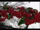 Диалог у новогодней елки - Т. и С. Никитины.