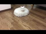 Японец насмешил весь мир, «скрестив» кота с пылесосом