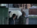 Белый медведь забрел в деревню Анадырь