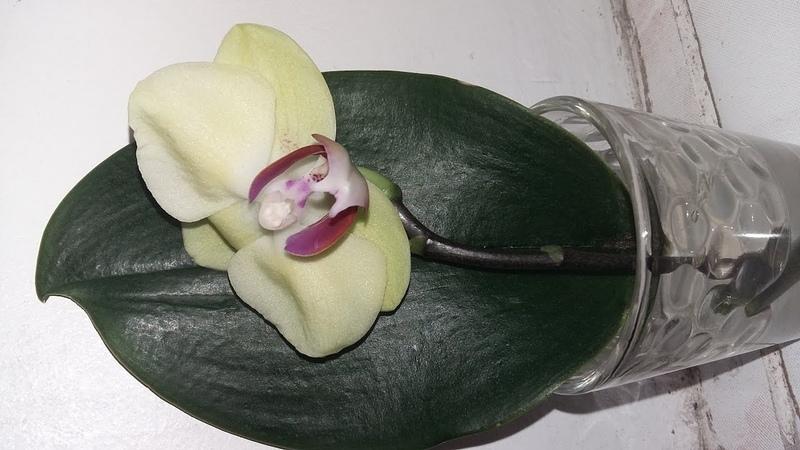 Укоренение цветоноса Орхидеи.часть вторая.