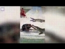 Дрессировщик и крокодил|Таиланд|По жести