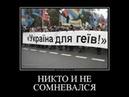 Гомогей с Киева о гей параде