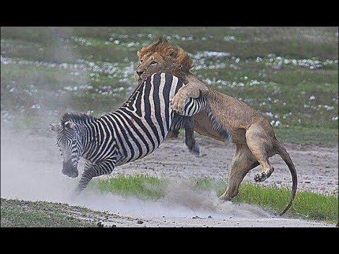 Дикая Природа фильм о животных Африки BBC