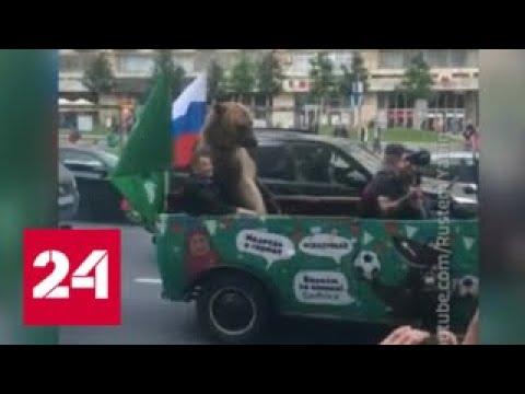 Владелец машины, возивший медведя по Москве, оштрафован - Россия 24