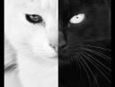 Элессара Bivröst гр. БАРДовый кот - Про чёрного кота и белую кошку