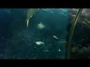 Sochi discovery world aquarium 2018.