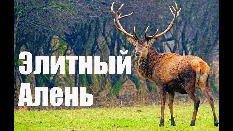 Элитный Алень 🦌 ПОЛНАЯ ВЕРСИЯ❗❗ МИЛЛИАРДЫ сериал 3 сезон