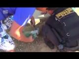 Спасение собаки, которая застряла в бетоне