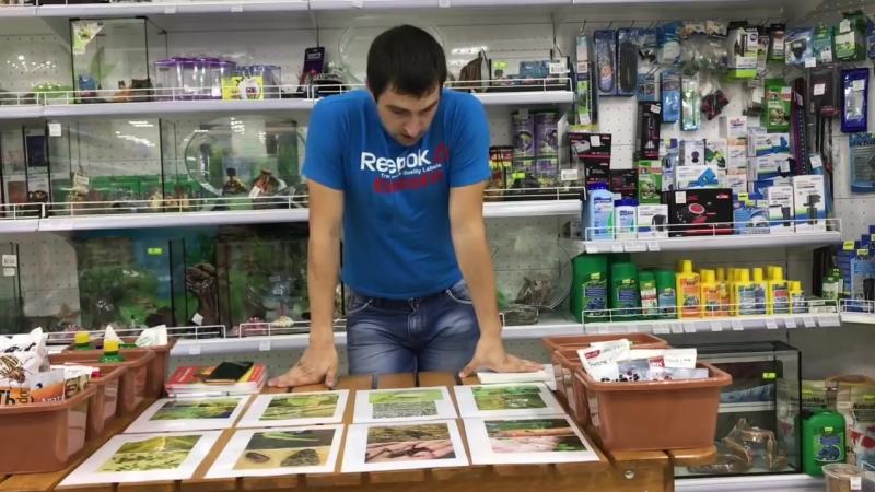 Мастер-класс- защита от насекомых - вредителей овощных культур