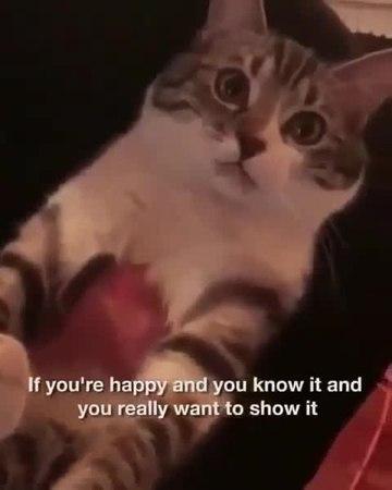 Say meow!