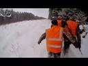 Охота 71 разведка, про охоту на волка, лоси, лесная камера, загонная на кабана