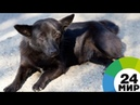 Человек собаке друг: вмерзшего в лед пса в Перми спасают зоозащитники - МИР 24