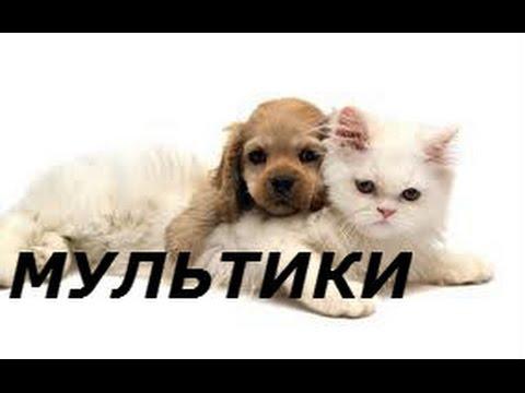 Сказка про котенка Кузьку Как котенок Кузька пошел в детский сад Мультики для детей 2016