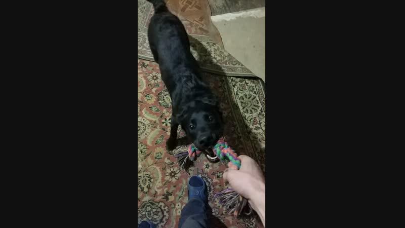 Мирта играет с верёвкой