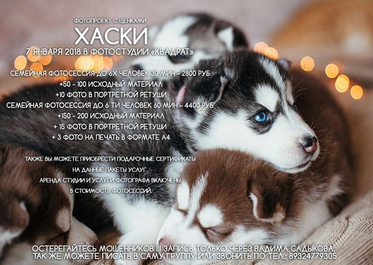 Афиша Фотодень со щенками Хаски