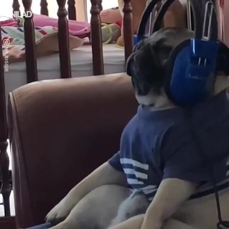 Music lover dog (5x)