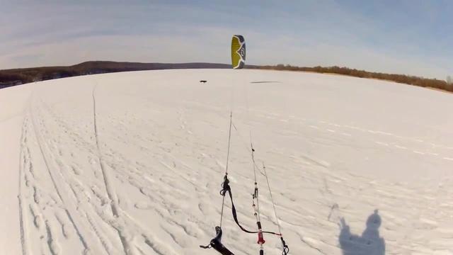 Dog chasing a Kite