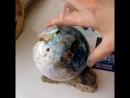 Дендритовый халцедон мерлинит, 105 мм, Казахстан