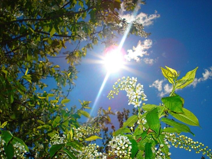 готовили яркое солнце весной фото нами
