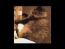 Angry cat bon jovi