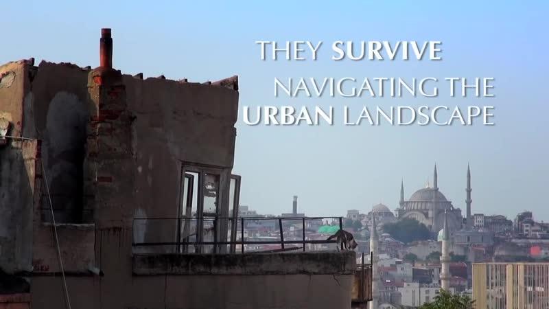 Фильм о жизни уличных кошек в Турции