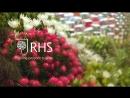 RHS Chelsea Flower Show - Highlights 2018