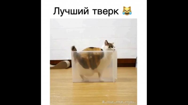 Для хорошечного настроения !! ))