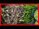 Los Guisantes Morados son una Excelente Fuente de Proteína, Vegetal, Vitaminas y Minerales