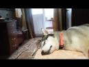 Керри очень ждала Джейси из похода, а Джейси вечно в походе устаёт больше всех )