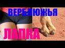 ПРАНК ВЕРБЛЮЖЬЯ ЛАПКА (озвучка DUraPrankTV)