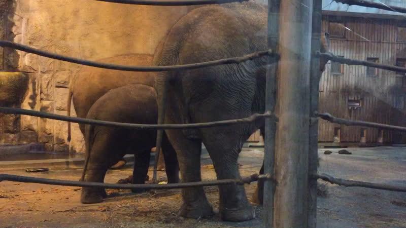 Слоники кушают
