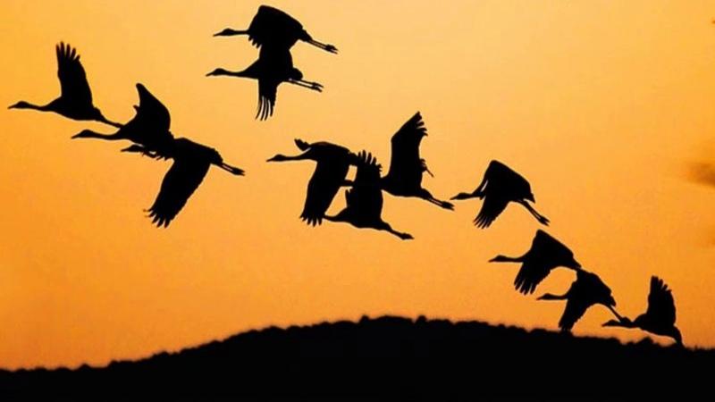 Перелётные птицы (рассказывает орнитолог Надежда Егорова)