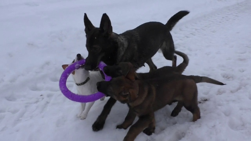 Walk and fun- Turba, Tormund, Dinamika