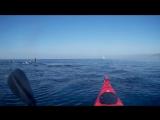 Море, каяк, дельфины