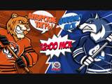 LIVE! «Амурские Тигры» - «Динамо» М (28.11 – 12:00)